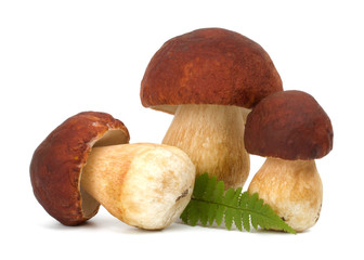 big boletus edulis isolated on white background close up