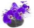 orchidée sur galet