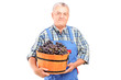 A vintner holding a bucket of grapes