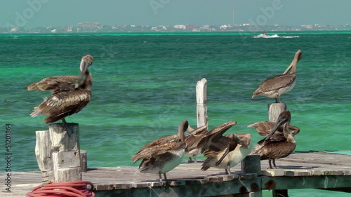 Group of pelicans preening on wooden dock  in Cancun, Mexico