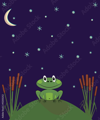 frog sits on a hill at night