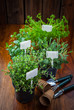 Various herbs for planting