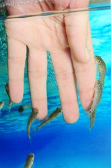 Manicure fish spa beauty treatment