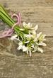 Schneeglöckchen mit rosa Schleife