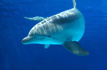Delfino curioso