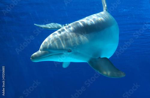 Foto op Canvas Dolfijnen Delfino curioso