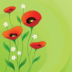 Retro summer background with Poppies