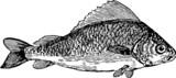 Saltwater Fish poster