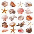 Seashell collection - 51210010