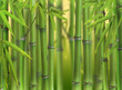 Fototapeten,kultur,frische,japan,pflanze