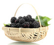 beautiful blackberries with leaves in basket isolated on white