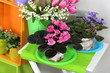Colorful shelves and table with decorative elements and flowers