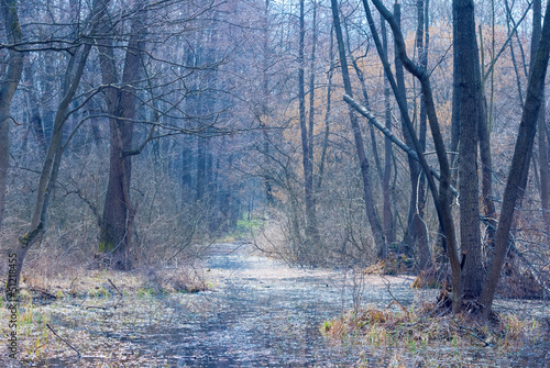 Foto op Canvas Bos in mist blue misty forest