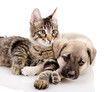 Portrait of a cat and dog. Isolated on a white