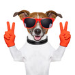 canvas print picture - peace and victory fingers dog