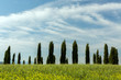 Tuscan circle of cypresses