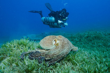 side-mount scuba diver with octopus and turtle