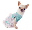 puppy chihuahua dressed