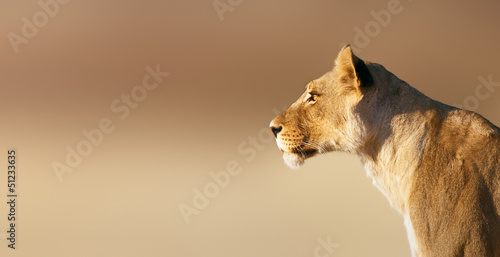 Portret Lioness