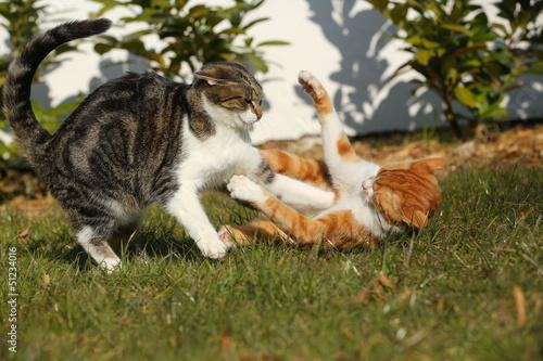 Tuinposter Tijger 2 Tigerkatzen im Streit