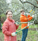 Two women pruning apple tree