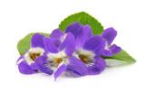 Wood violets flowers