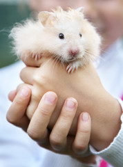 Hamster in the hands of a child