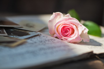 Stilleben mir Rose im Sonnenlicht