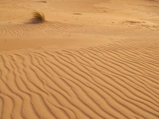 Henty Dunes in Tasmania