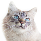 Fototapety Domestic cat.