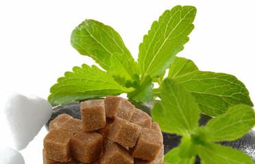 Stevia Rebaudiana mit Zucker