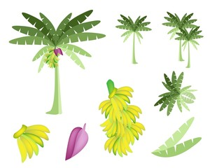 Set of Banana Tree with Bananas and Blossom