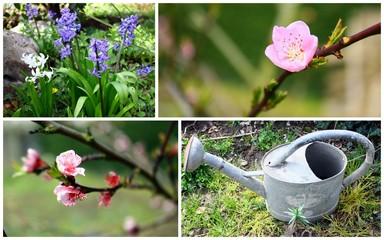 composition de printemps