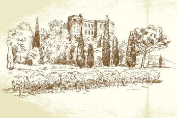 Vineyard France - hand drawn illustration