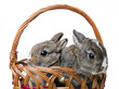two little rabbits in a basket