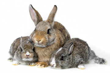 rabbits on white background