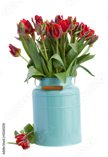 spring tulip flowers in blue