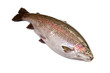 Rainbow trout on a white studio background.