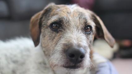 Perky puppy. Shallow DOF.