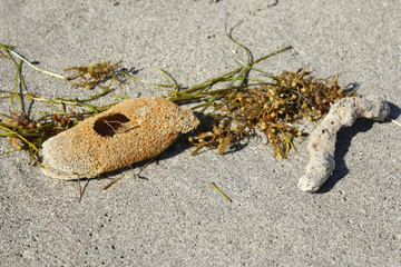 Natural Sponges on a Beach