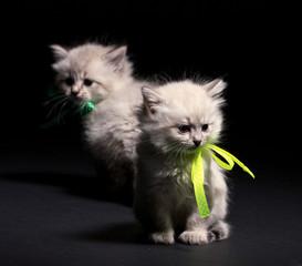 Two little kittens