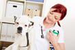 Hund bekommt Spritze mit Impfung beim Tierarzt