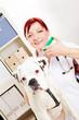 Tierärztin impft Boxer in Tierarztpraxis