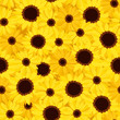 Seamless background with sunflowers and calendula. Vector