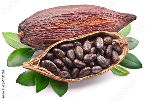 Cocoa pod - 51272006
