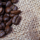 Coffee grains scattered on sacking