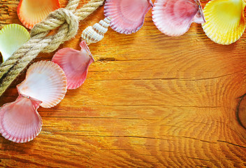 shells on wooden background