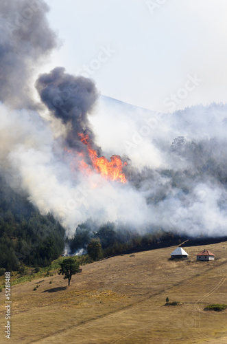 Large fire on Mount. Fire swept through a forest and meadow