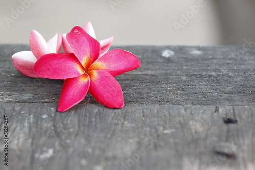 Red Frangipani Flower on old woods.
