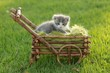 Baby Kitten Outdoors in Grass